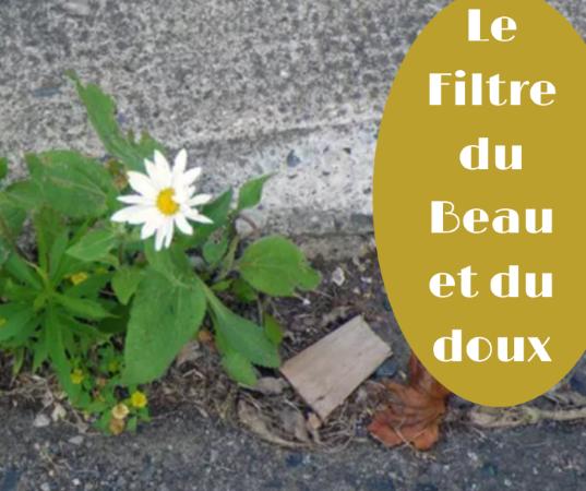 Le Filtre du Beau et du doux 4